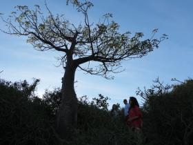 1baby baobab.JPG