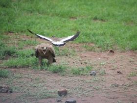 14 bird brawl.JPG
