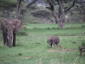 Elephant Baby and Ant Hill.JPG