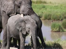 elephanthug