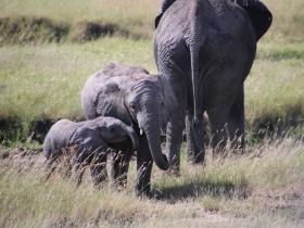 elephantkids