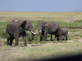 elephanttrio